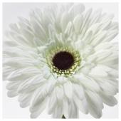 СМИККА Цветок искусственный, Гербера, белый, 50 см