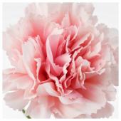 СМИККА Цветок искусственный, гвоздика, розовый, 30 см
